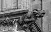 Gargoyle am Kölner Dom (ulrichcziollek) Tags: nordrheinwestfalen kirche kathedrale kirchen gotik dom regenwasser steinmetzarbeiten steinmetz köln gotisch