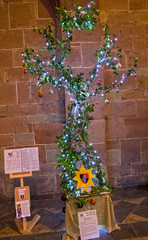 4U5A6423 (bartlett2) Tags: | worcester cathedral christmas trees worcestershire