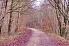 24 Forbach décembre 2017 (paspog) Tags: forbach france moselle lorraine 2017 forêt wald bois woods forest 1017
