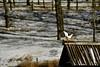 Nature (Landscapes of Europe) Tags: italy riccia molise travel landscape nature snow lake frozen