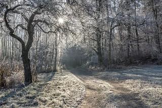 *Winterlicht*