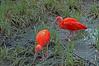 Birds (edvk49) Tags: birds bird vogels vogel rood red
