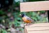 july 2016. lake katherine. (timp37) Tags: summer july 2016 lake katherine illinois bird palos