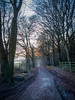 5th January 2018 (Rob Sutherland) Tags: tormuir wood woodland lockerbie dumfries galloway scotland scottish track trail road forest fence mist evening afternoon winter uk britain british tree trees forestry