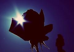 Siluetas en azul (portalealba) Tags: cómpeta axarquía málaga andalucía españa spain flores azul portalealba pentax pentaxk50 cielo 1001nights 1001nightsmagiccity