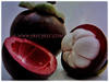 Fibrous red rind of Garcinia mangostana protects the snow-white segments of Garcinia mangostana (jayjayc) Tags: flickr17 jaycjayc malaysia kualalumpur floweringplants fruittree fruits garciniamangostana mangosteen purplemangosteen manggisinmalay white reddishpurple perennials tropicalplant