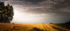 Hurry for Harvest (Beppe Rijs) Tags: deutschland germany schleswigholstein schlei landschaft landscape natur nature field feld horizont horizon clouds farbig colored line linie rural ländlich color farbe acker yellow gelb sky himmel getreide cereals grau grey cloud wolke