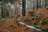 Acequia-de-Cáñar ( La Alpujarra) (Lucas Gutiérrez) Tags: acequia cáñar puentepalo sulayr tramo4 laalpujarra parquenacionaldesierranevada otoño granadanatural agua lucasgutierrezjimenez