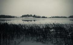 Wet winter eve (Antti Tassberg) Tags: landscape pitkäjärvi jää talvi bw suomi espoo järvi ranta beach blackandwhite finland ice lake monochrome scandinavia shore winter uusimaa fi