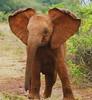 Babe - So young, so full of energy (janetfo747 ~ Dreaming of Africa) Tags: elephants babe energy spirit wild babies nairobi kenya
