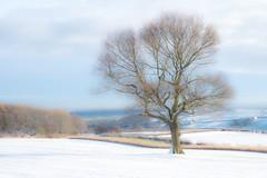 Dreaming ........... (klythawk) Tags: winter nature sunlight dreamy december white blue brown green olympus omd 1240mm dorkethead calverton nottingham klythawk