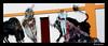 Violence gratuite ... (Milucide en intermittence !) Tags: arènes dax france aquitaine taureau miseàmort violence vaincu douleur torero tauromachie