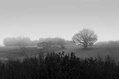 Brouillard (Meculda) Tags: brouillard smog blackandwhite noiretblanc paysage landscape nikon d7200 sigma 105mm france french arbre tree nature extérieur monochrome monochrom maison house ruine