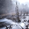 Frozen Swamp (Michael Berg Photo) Tags: michaelberg michaelbergphoto mbphotography canon 6d canon6d rokinon24mm rokinon samyang samyang24mm 24mm 24f35tse 24mmtiltshift mountains cascades winter swamp