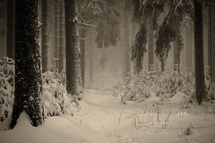 Ende der Zeitalter (PetschoX5) Tags: petscho freedomstreaming canon 700d fotografie photography deutschland germany cyansworld cyan myst atrus catherine yessha d´ni weiss white schnee snow forest wälder wald nebel fog tannenbaum