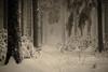 Ende des Zeitalters (PetschoX5) Tags: petscho freedomstreaming canon 700d fotografie photography deutschland germany cyansworld cyan myst atrus catherine yessha d´ni weiss white schnee snow forest wälder wald nebel fog tannenbaum