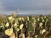 Chihuahuan desert trail (Manue@PrettyKiku) Tags: chihuahandesert bigbend bigbendnationalpark nationalparks westtexas jan18