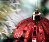 red christmas-tree ball (aika217) Tags: red christmastree ball canon eos 77d tamron sp 90mm f28 di vc usd macro11 f017