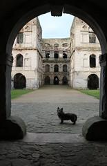 Krzyżtopor Entrance with dog IMG_8717 b (david.neville2776) Tags: krzyżtopor castle ruins świętokrzyskie poland dog