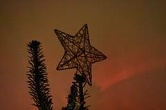 Christmas Tree 2 (WT_fan06) Tags: christmas tree brad craciun xmas party sarbatori globuri globes light lumina artsy aesthetic happynewyear newyear night winter iarna family red