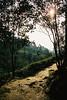 Sundawn (pacco_racco) Tags: sundawn trees light nature yogyakarta java indonesia kodakporta400 leicasummicron35mmf20asph leicam6