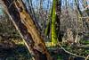 Week 37 - Story: Balance - In the Forest #dogwood2017week37 (MrFox9) Tags: m42 carlzeissjena ausjena flektogon35f24 flektogon dogwood52 dogwood2017 dogwood52week37 dogwood2017week37