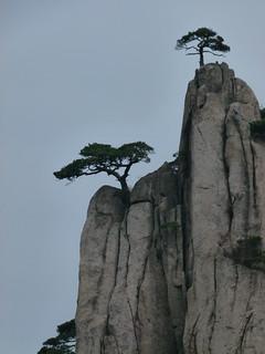 One Tree per Peak