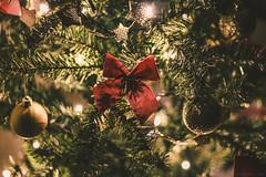 First Shot (ILCONTE Visual) Tags: natale albero fiocco regali christmas gift lights luci red rosso decorazioni natalizio tree warm knot decoration winter inverno dicembre december