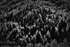 Let There Be Light (Ron Rothbart) Tags: california marin marincounty mttam mttamalpais bw blackandwhite forest light monochrome trees
