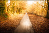 Along the golden path (G. Postlethwaite esq.) Tags: clemsonspark derby derbyshire fujix100t leaves park path photoborder trees warmtones winter sliderssunday hss