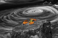 "Gold Leaf (""A.S.A."") Tags: whirlpool river rocks countryside selective colour leaves polarizer slow shutter longexposure sonya7rmkii sony2470f28gm heliopancpl asa2017"