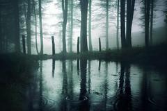 Enekorri (arbioi) Tags: baztan canon euskalherria eos40d eugi enekorri esteribar frio gr11 paisaje okoro kintoreal urkiaga montaña navarra nafarroa naturaleza niebla quintoreal bosque zagua