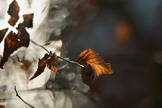 Copper leaf. Breaking through diamond light.