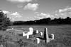 Mass grave (?) at the new jewish cemetery in Nemyriv (berlinger) Tags: nemyrivнемирів vinnytskaoblast ukraine jewishcemetery cemetery בֵּיתקְבָרוֹת נמירוב massgrave קבראחים nemirov