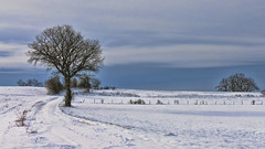 Bel hiver... (Fred&rique) Tags: lumixfz1000 photoshop raw hdr hiver froid neige paysage nature arbres chemin jura