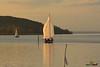 A-LUR_3332 (OrNeSsInA) Tags: lagotrasimeno lago aironi byrd
