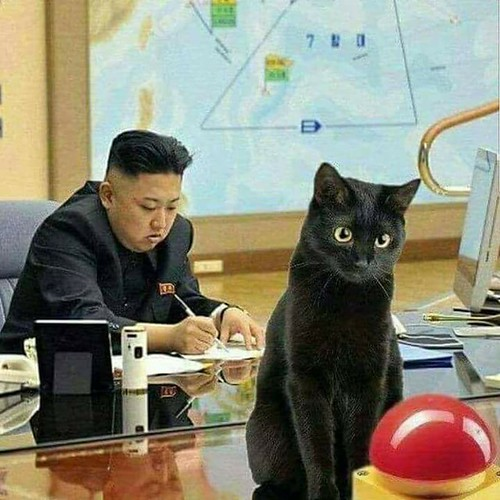From flickr.com: Kim Jong un and his favorite cat. {MID-247960}