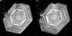 4jan18J3D (peterobrien186) Tags: 3d stereo crosseye cross eye snow ice snowflake snowcrystal winter macro nature