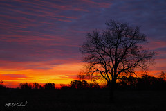 Canada Roadside Sunrise_T3W3396 (Alfred J. Lockwood Photography) Tags: alfredjlockwood nature sunrise silhouette canada ontario autumn color clouds sky morning dawn twilight