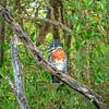 P1020634_DxO (yoda361) Tags: safari africa kingfisher martinpecheur bird