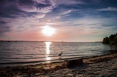 Egret in the Sun - Snead Island (Cracked_Lens) Tags: sunset sun sunsetboat floridasunset floridatrail floridapreserve floridanature floridasky floridaclouds floridabeach sky skyart clouds cloudart cloud bumblebeegoby