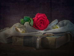 Happy Valentines (Dave Whiteman - AU) Tags: stilllife frangipani redrose valentinesday fineart