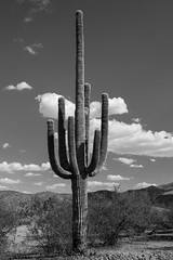 Classic (Chris Dreher) Tags: nature feel sky old blackandwhite bw landscape desert saguaro clouds