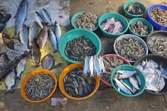 KERALA FORTH KOCHI FISH MARKET 8315r (opaxir) Tags: kerala india fish market