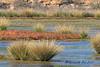 PA230385t_e (mrkevinw08) Tags: portugal algarve parquenaturaldariaformosa parque natural riaformosa