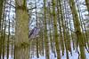 barred owl (Mel Diotte) Tags: barred owl woods forest mel diotte