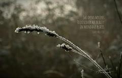 Daily Haiku: Mother Earth (James Milstid) Tags: dailyhaiku haiku jemhaiku mothernature motherearth grass frost haiga