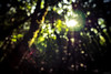 Lensflare - Laowa 7.5mm f/2 (Sebastian Bayer) Tags: olympus lensflare effekt licht urlaub sonne strahlen omd blätter madeira wald omdem5ii portugal
