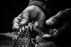 DSC_5797 2 (ahcravo gorim) Tags: redes mãos mar xávega torreira ahcravo gorim