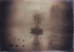 A Winters Dawning (Bill Eiffert) Tags: park pictorial texture birds nature water trees atmospheric